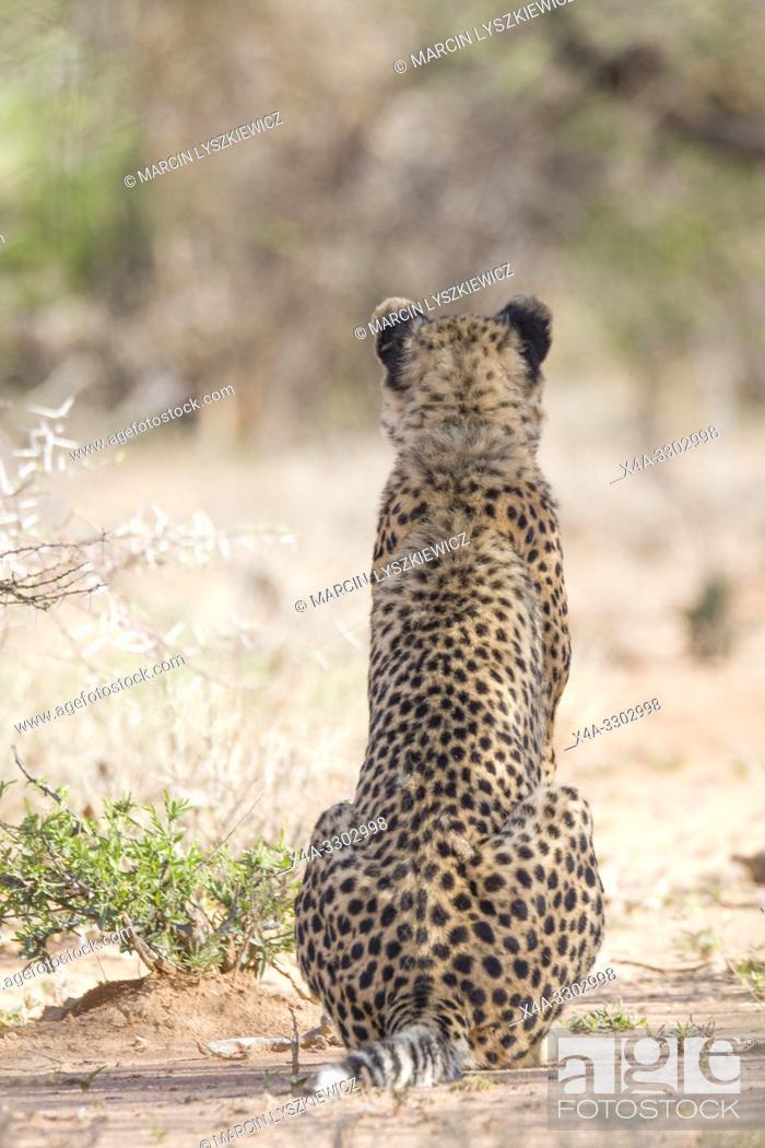 Stock Photo: Portrait of sitting Cheetah, Okonjima Nature Reserve, Namibia.