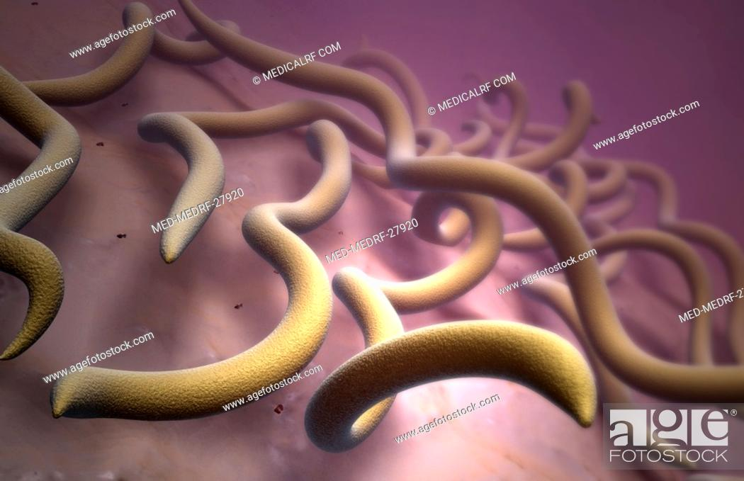 Stock Photo: Lyme disease bacteria.