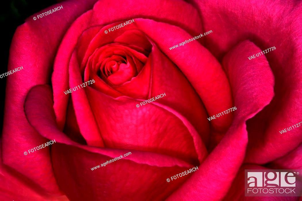 Stock Photo: nature, austria, lat, close-up, CLOSE, alfred.