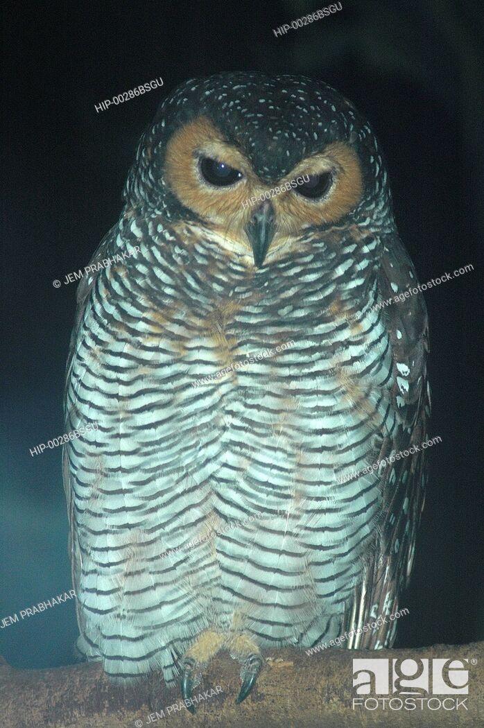 Imagen: OWL IN JURONG BIRD PARK, SINGAPORE.