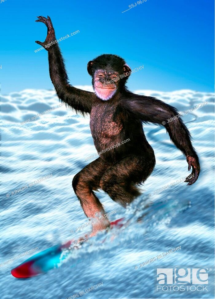 Stock Photo: Ape on a snowboard.