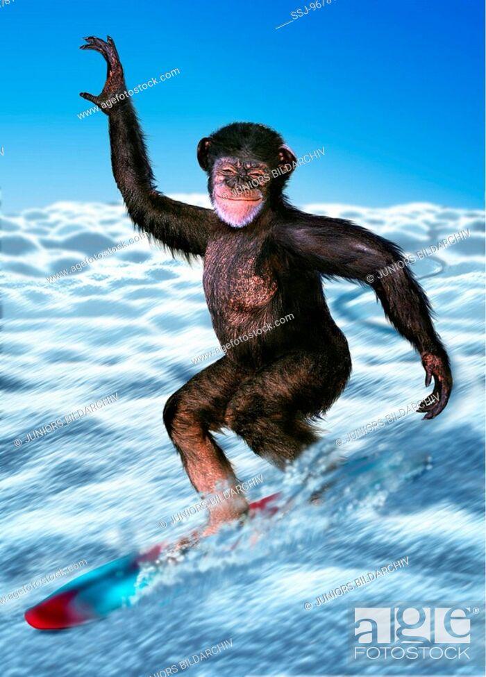 Imagen: Ape on a snowboard.
