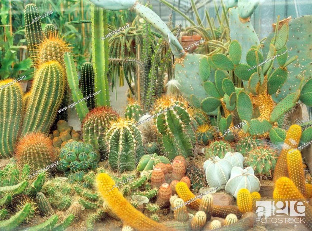 Stock Photo: different cacti and succulents.