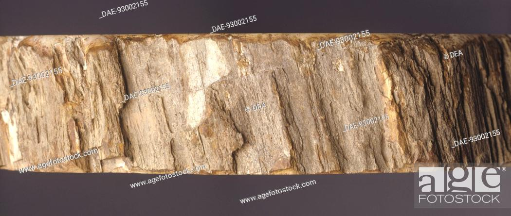 Stock Photo: Minerals - Wood siliconized.