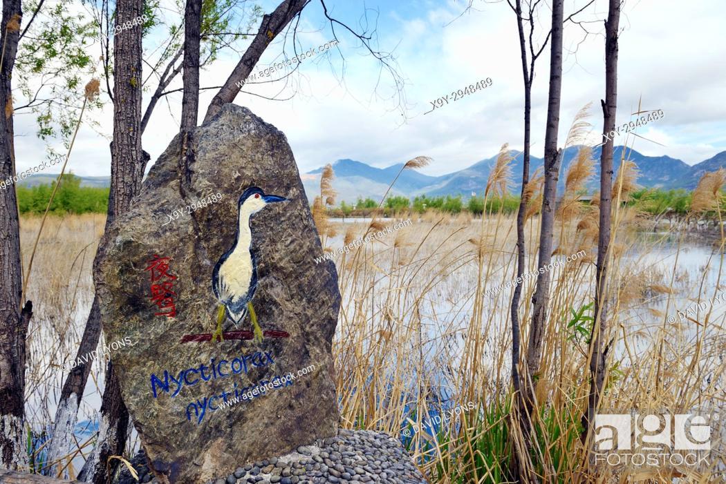 Stock Photo: North over Lashi Lake at Lijiang Lashihai Plateau Wetland Nature Reserve, Yunnan. Important Naxi and Li ethnic people and major bird migration area.