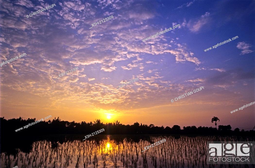 Stock Photo: paddy fields at sunset, Lombok island, Lesser Sunda Islands, Republic of Indonesia, Southeast Asia and Oceania.