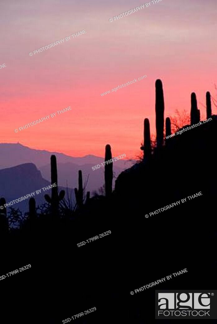 Imagen: Sunset over Avra Valley from the Tucson Mountains, Tucson, Arizona, USA.