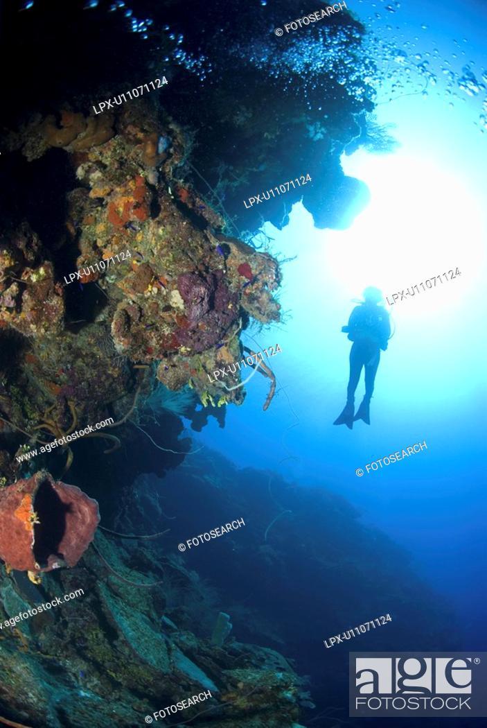 Stock Photo: Scuba Diver over coral and sponge reef, Maria La Gorda, Caribbean.