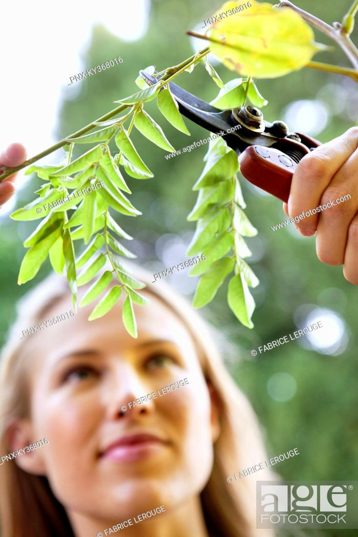 Stock Photo: Young woman pruning plants.