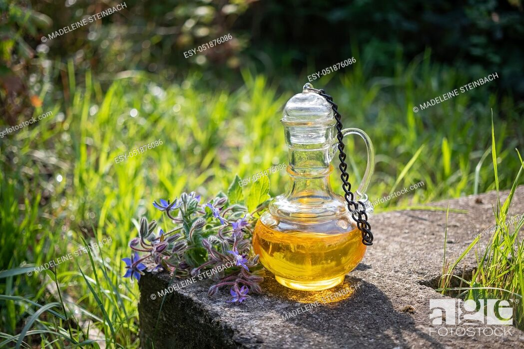Stock Photo: A bottle of borage oil with blooming plant, photographed in a garden.