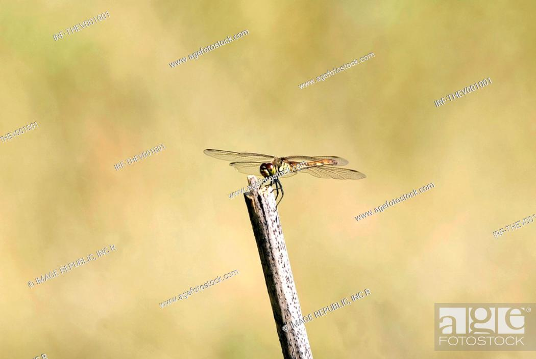 Stock Photo: dragonfly on the bough.