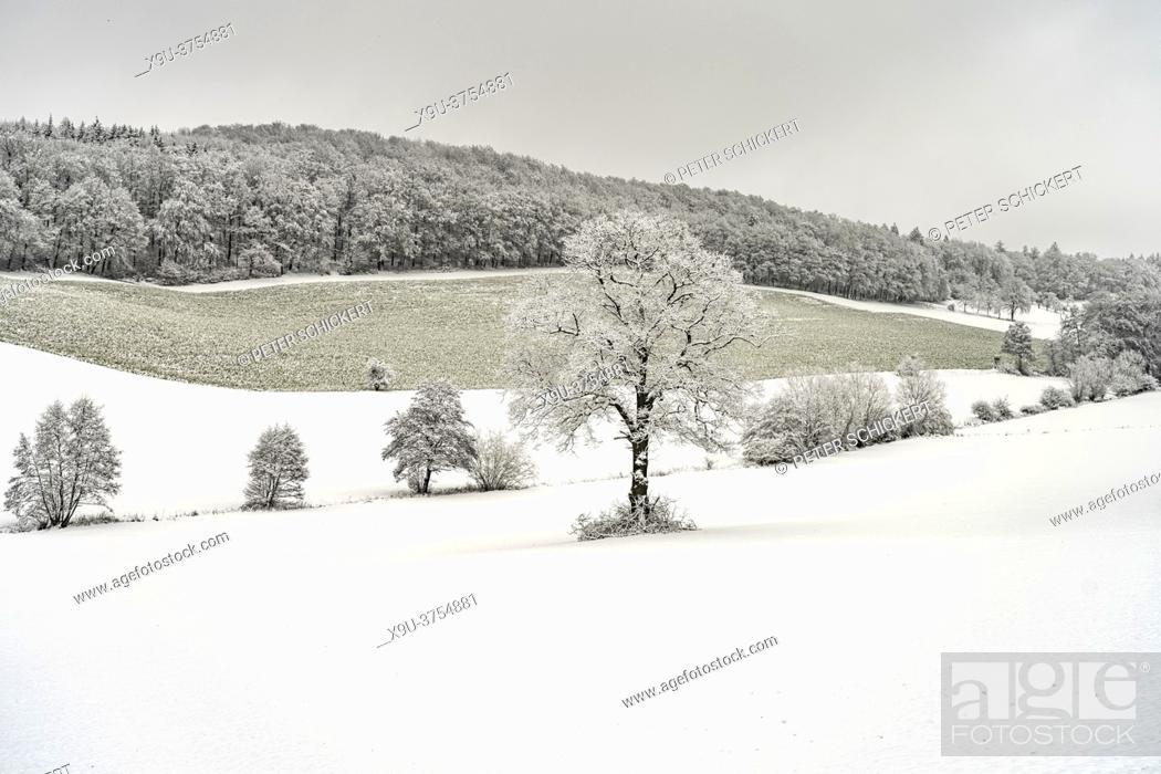 Stock Photo: Verschneite Winterlandschaft im Sauerland, Sundern, Hochsauerlandkreis, Nordrhein-Westfalen   Snowy winter landscape in Sundern, Hochsauerland district.