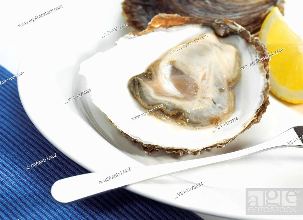 Stock Photo: BELON OYSTER ostrea edulis, A FRENCH SPECY ON PLATE.