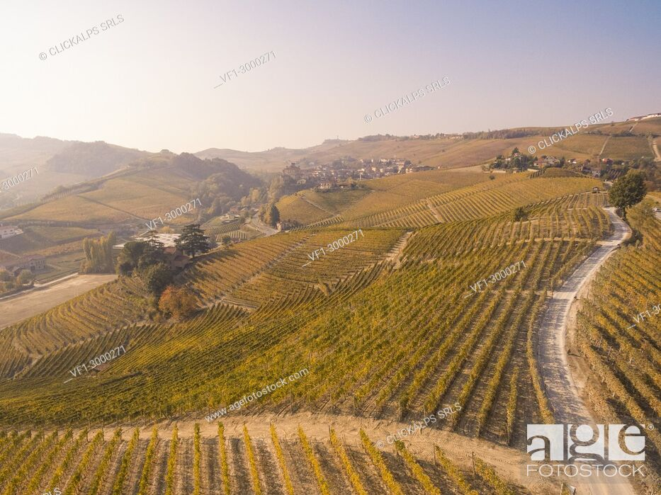 Stock Photo: Italy, Piedmont, Cuneo District, Barolo, Langhe Barolo at sunrise.