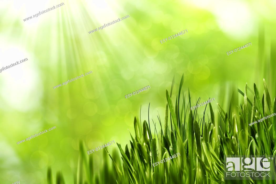 Stock Photo: Abstract natural backgrounds with green grass and beauty bokeh.