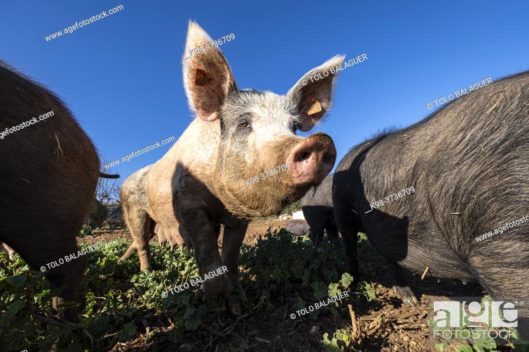 Stock Photo: farm Sa Teulera, Manacor, Mallorca, Balearic Islands, Spain.