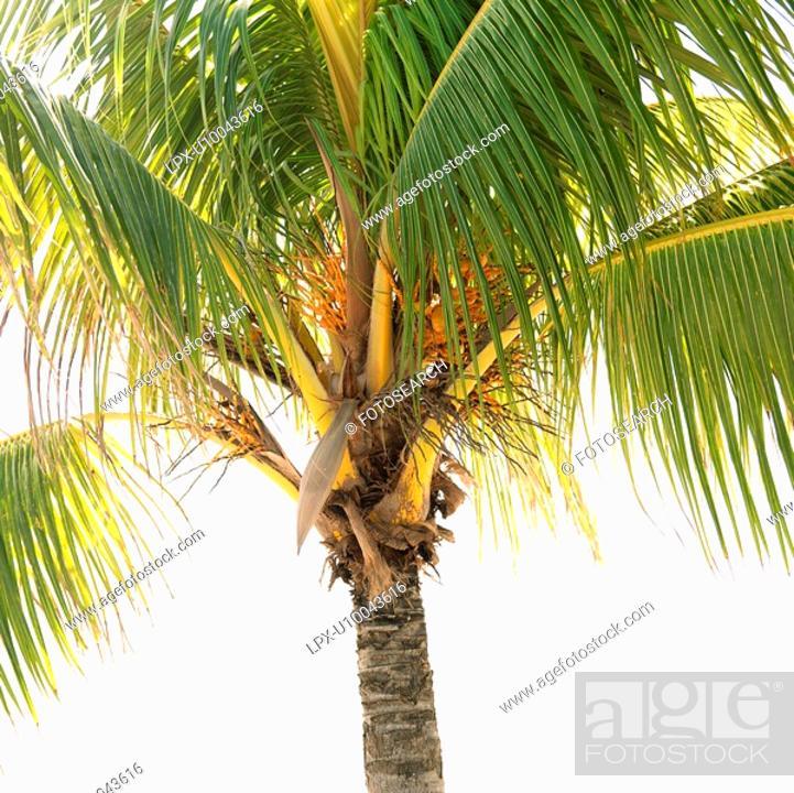 Stock Photo: Close-up of palm tree.