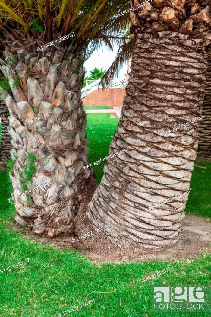 Photo de stock: Palm tree trunk background.