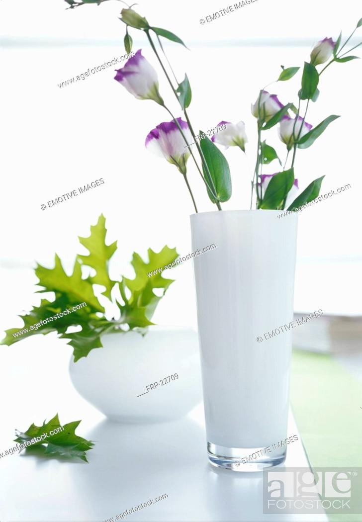 Stock Photo: Lisianthus in a white glass vase.