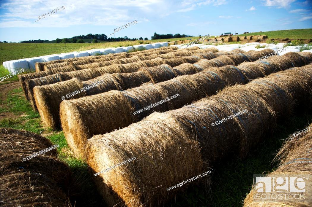 Stock Photo: Round hay bales.