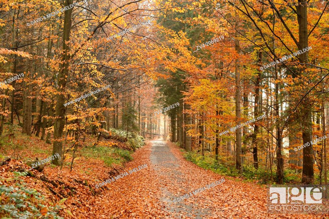Stock Photo: Landscape of a trail going through the forest in autumn in the bavarian forest.