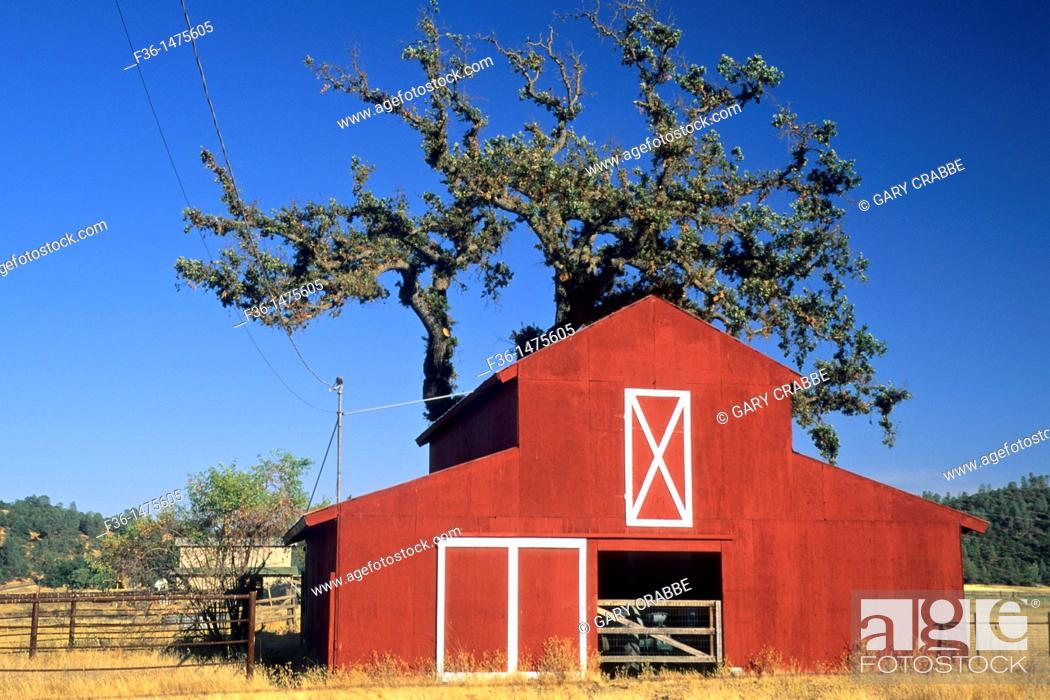 Stock Photo: Red Barn and tree, near Middletown, Lake County, California.