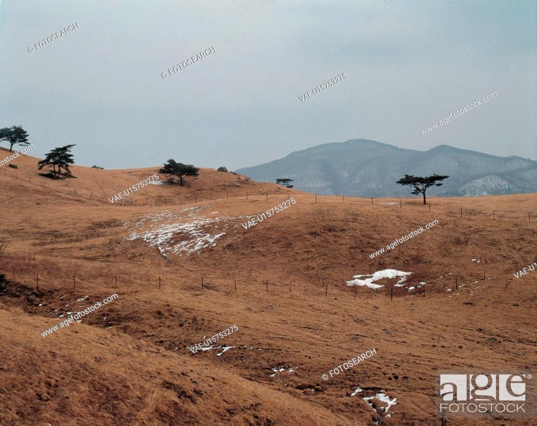 Stock Photo: tree, scenery, lawn, hill, field, snow, nature.