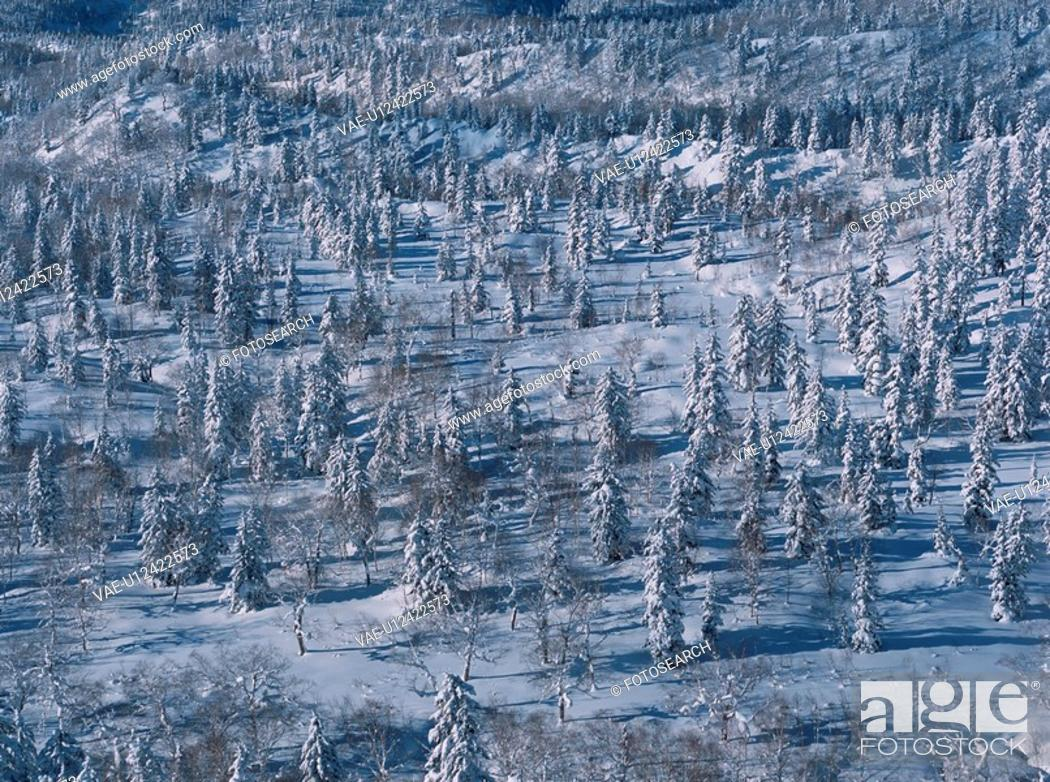 Stock Photo: Forest In Snow.