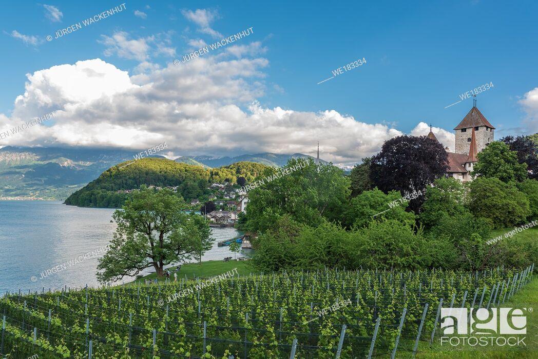 Imagen: Spiez castle on lake Thun, Spiez, Bernese Oberland, Switzerland, Europe.