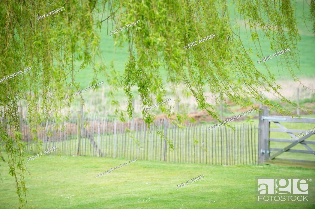 Stock Photo: Tree with fence in a field.