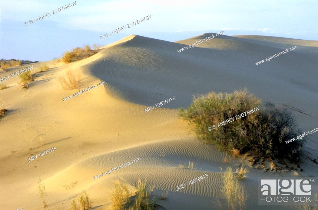 Spring Comes To Dunes >> Saxaul Trees On Wind Shaped Sand Dunes Haloxylon Sp Stock