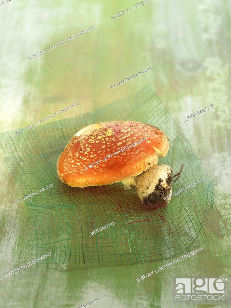 Stock Photo: matamoscas / fly agaric.