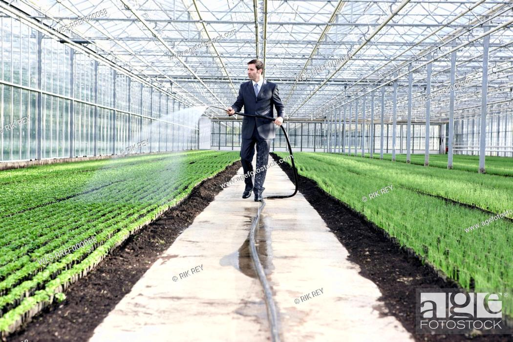 Stock Photo: Germany, Bavaria, Munich, Mature man in greenhouse watering seedlings.