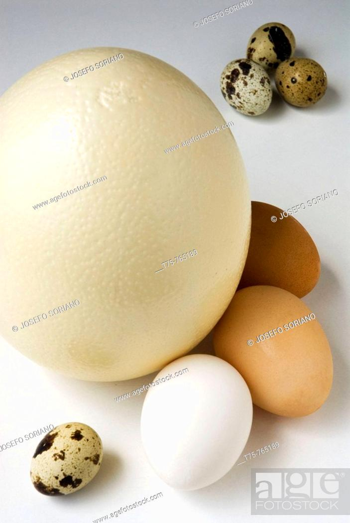 Stock Photo: Ostrich eggs, chicken and quail.
