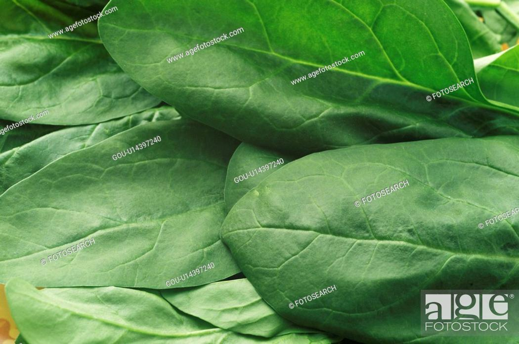Stock Photo: Closeup of raw spinach leaves.
