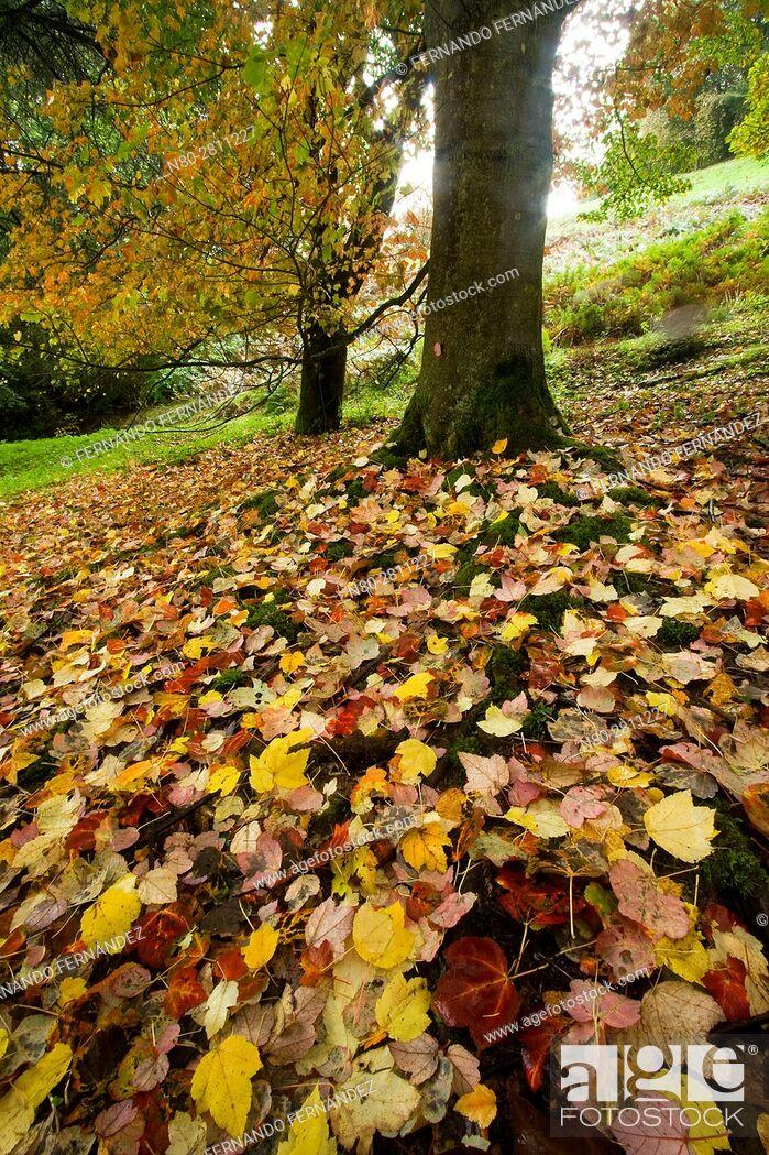 Stock Photo: Winkworth Arboretum. National Trust. Godalming. Surrey. England.
