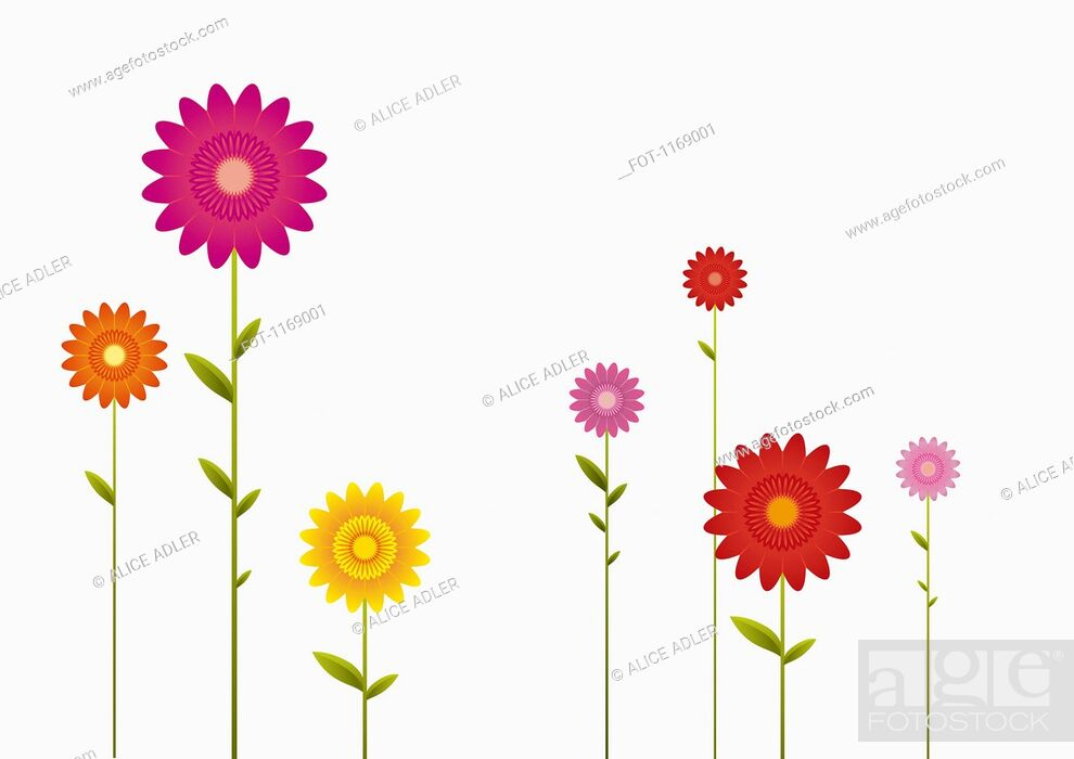 Stock Photo: Various colors and sizes of Gerbera Daisies in a row.