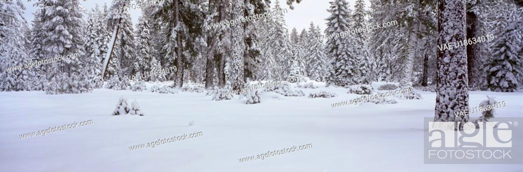 Stock Photo: Winter Snowstorm in the Lake Tahoe Area.