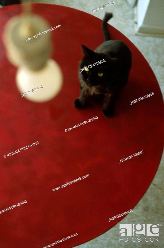 Stock Photo: Black Cat on Red Table.