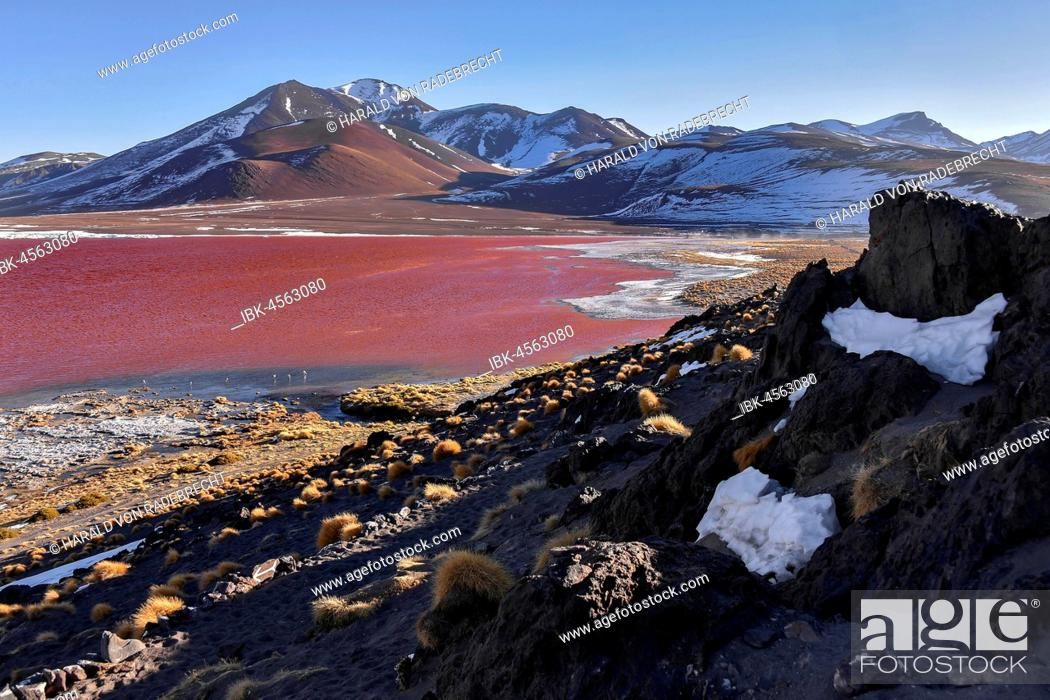 Imagen: Laguna Colorada with red water by high algae content, near Uyuni, Lipez, Bolivia.