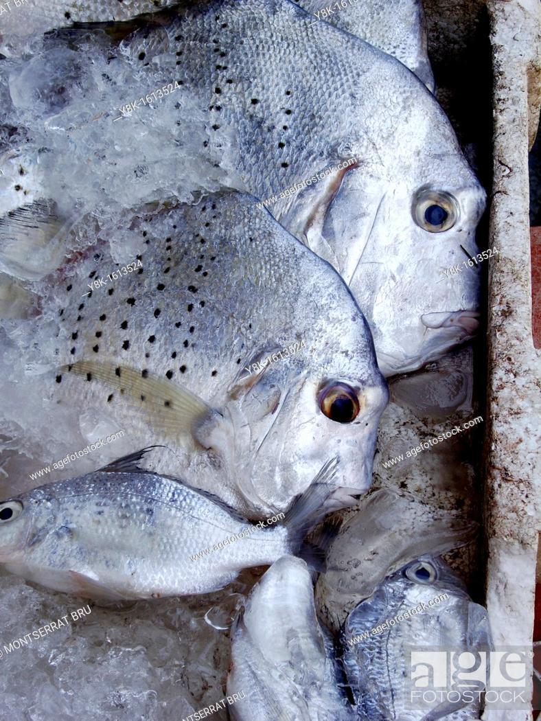 Stock Photo: Thai fish in ice box at Thong Sala market, Koh Phangan, Thailand.