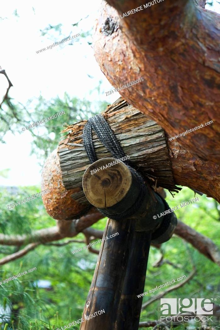 Stock Photo: Tree branch with bamboo support, close-up.