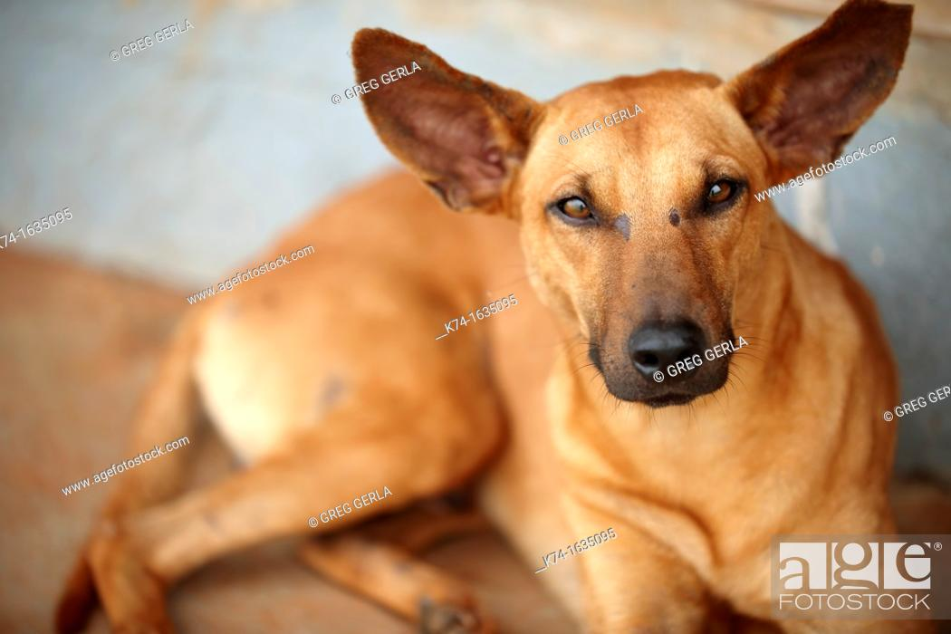 Stock Photo: crazy looking dog making a funny face.