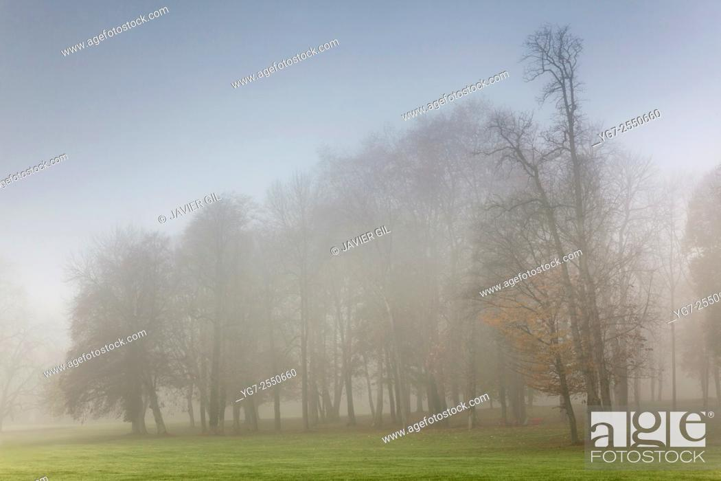 Stock Photo: Fog in Chamarande, Essonne, Ile-de-france, France.