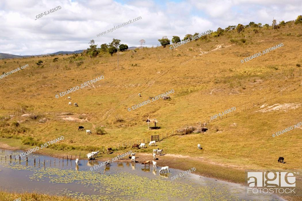Stock Photo: Animals Drinking Water in Dam, Boa Nova, Bahia, Brazil.