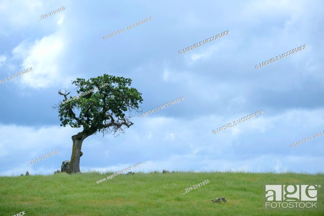 Stock Photo: A lone oak tree stand against a dramatic sky.