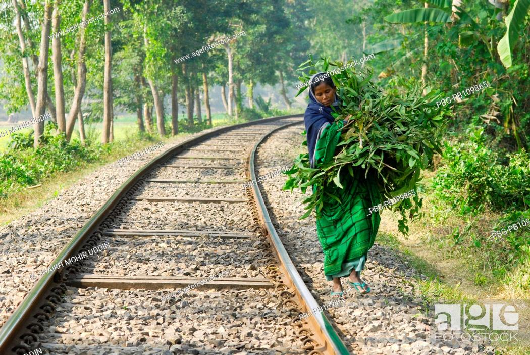 Stock Photo: A woman carries leaves and branches of tree to be used as fuel for cooking at Court Chandpur Jhenaidah, Bangladesh January 2011.