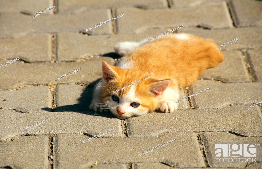 Stock Photo: kitten - lying.