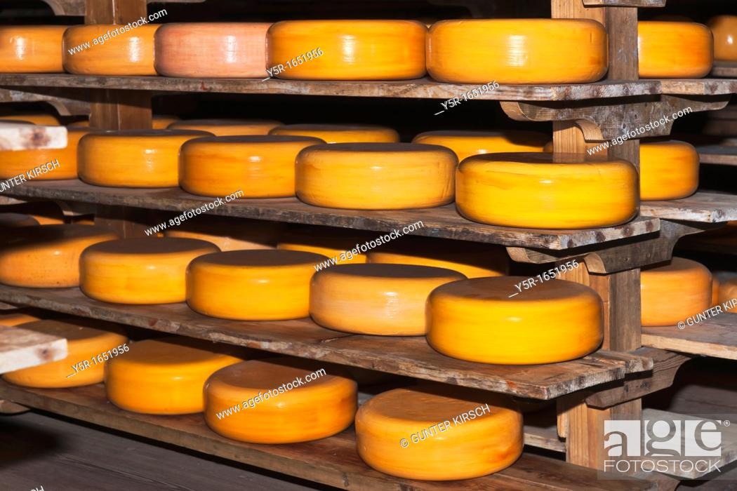 Stock Photo: Many round cheese store on the shelf.