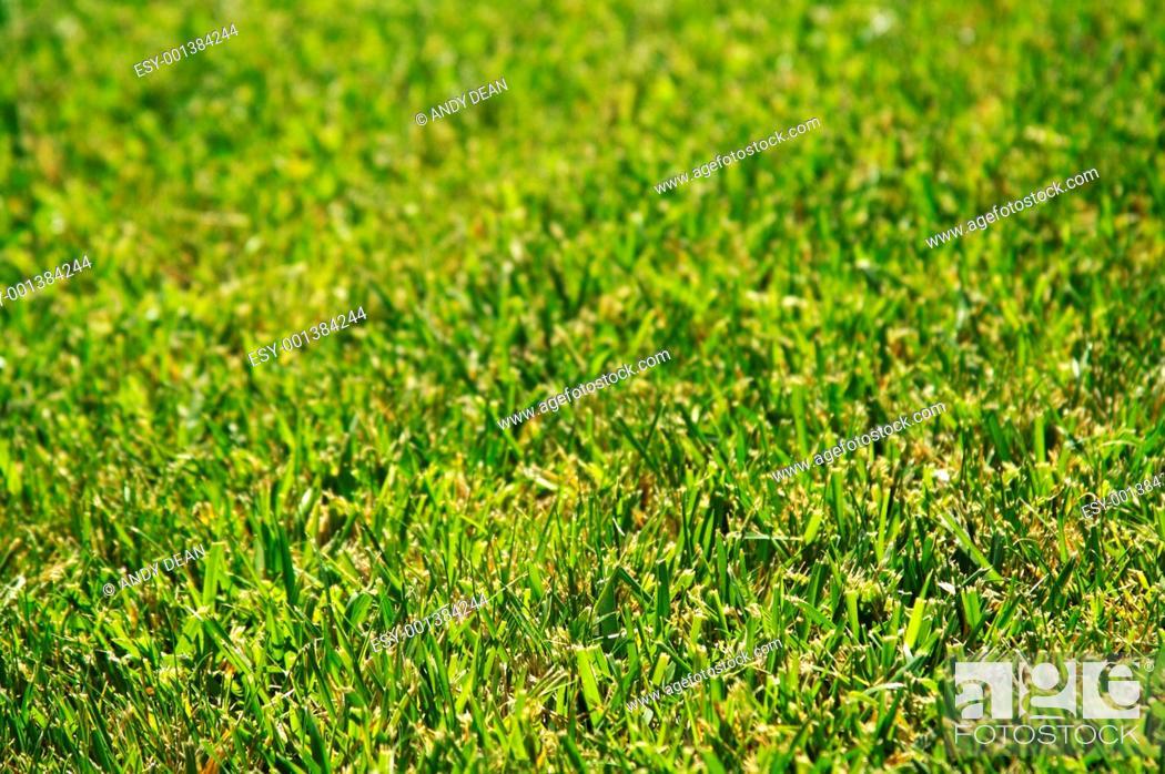 Stock Photo: Lush Green Grass.